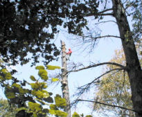 About Us-Bellizzi Tree Service
