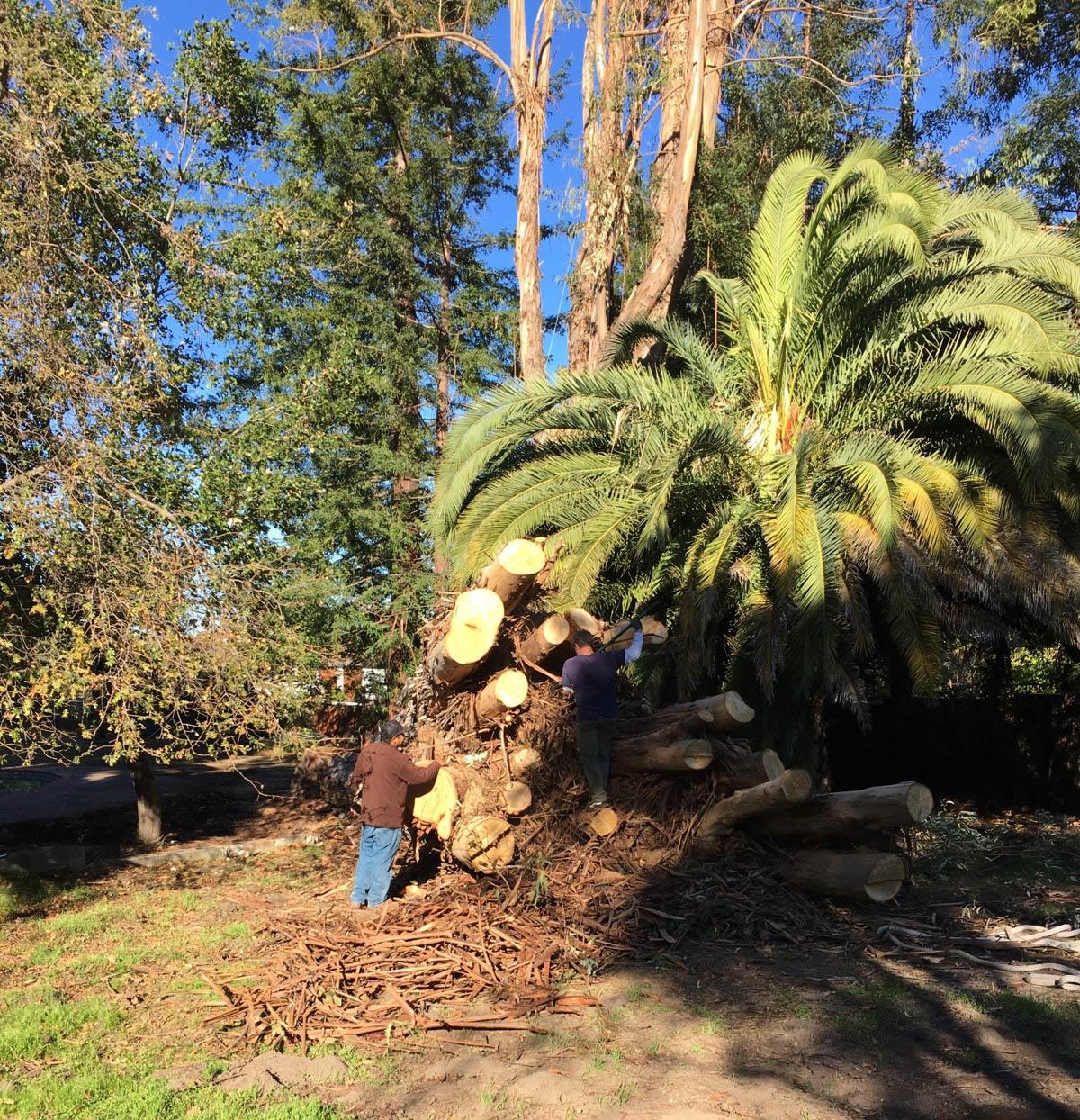 Stump Grinding, Campbell, San Jose, Morgan Hill, Sonora, Gilroy