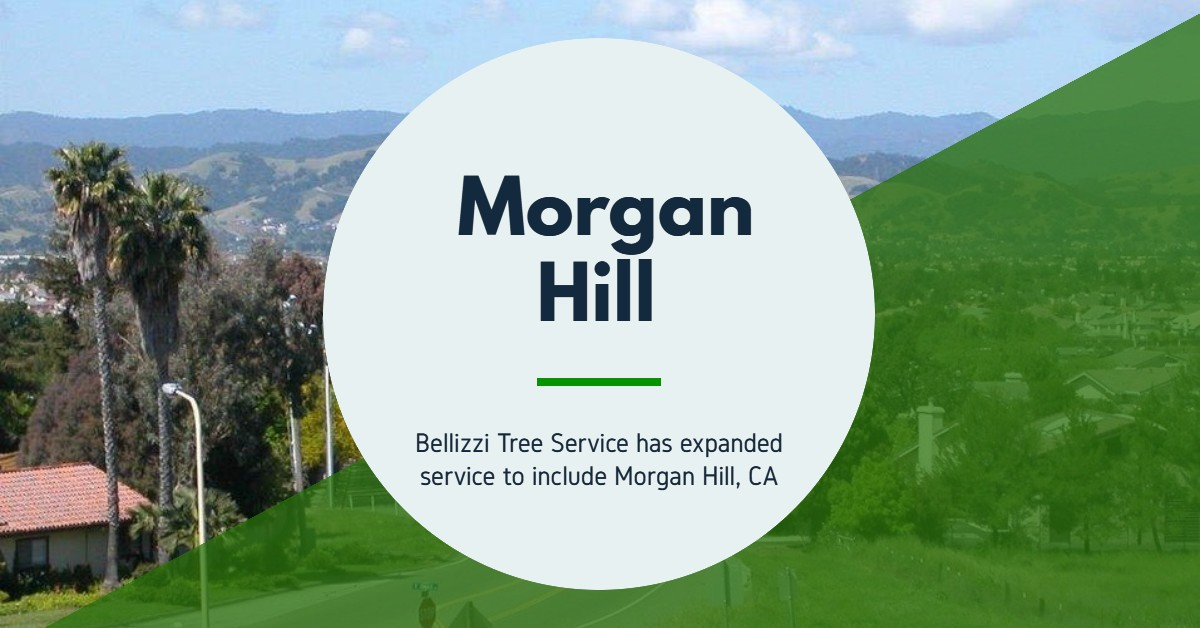 Tree Service, Morgan Hill, Gilroy, San Martin