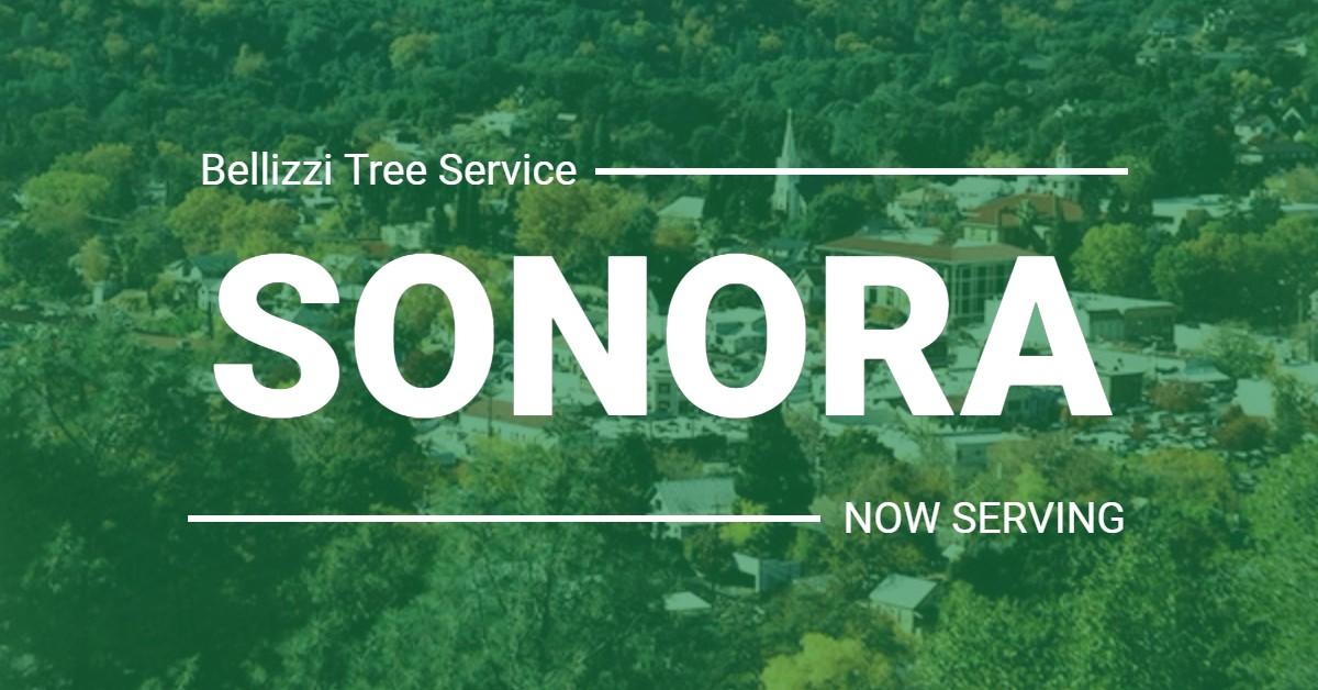 Tree Service, Sonora