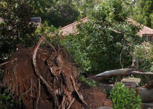 Tree Removal, South Bay, Campbell, San Jose