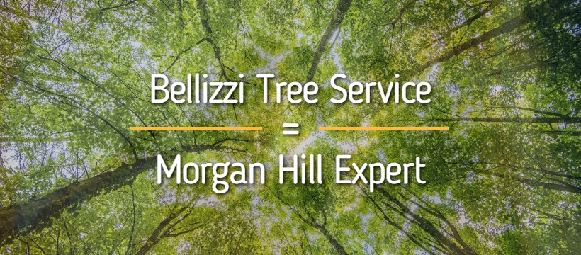 Tree Service, Morgan Hill